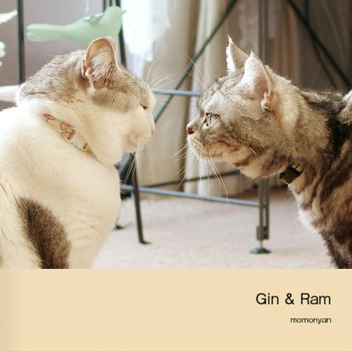 『Gin & Ram』