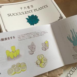 【絵と文】多肉植物 SUCCURENT PLANTS