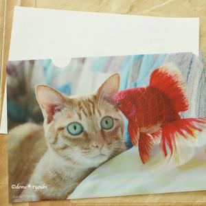 金魚と猫のクリアファイルB