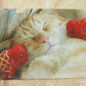 金魚と猫のクリアファイルA