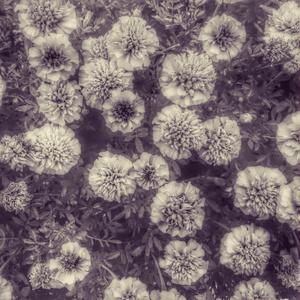 花と木と水の加工テクスチャ&元写真データ