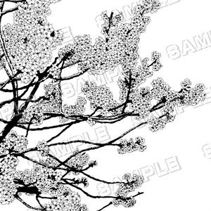 マンガ背景素材セット(桜 さくら 満開 春の花 日本 入学 卒業)
