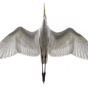 鳥のポーズ・素材集 サギ編