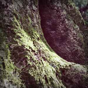 Yozhik「Moss (Monthly Ambient #01)」
