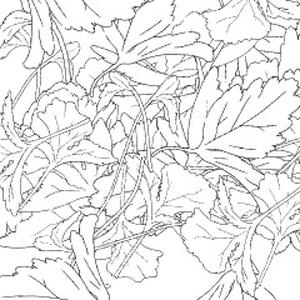 パクチーブラシ二種と3D鉄鍋(クリスタ1.6.0~)香菜 コリアンダー シャンツァイ