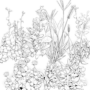 野草ブラシ7種セット・コミスタクリスタ兼用素材