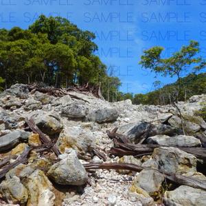 火山で朽ちた森:写真素材集