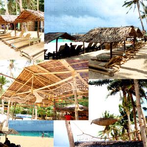 南国のワイルドビーチ:無料写真素材集