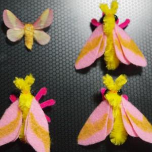 カエデガ(rosy maple moth)フィギュア 蛾 蝶