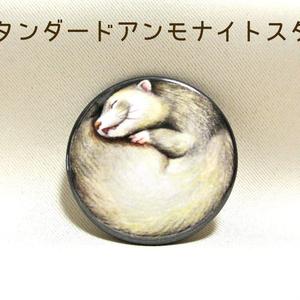 フェレット爆睡缶バッジ / Ferret can badge