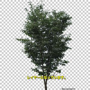 木の素材_No,01