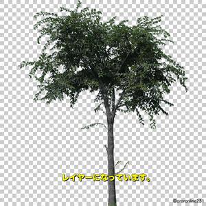 木の素材_No,02