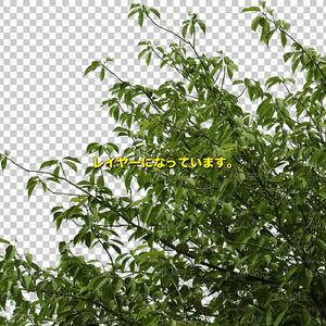 木の素材_No,06